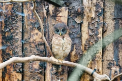 Scottish Owl Centre
