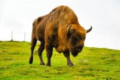 Highland Wildlife Park