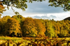 Perthshire, Fall colours